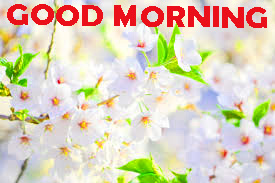Good Morning Images Photo Pictures Download For Whatsapp