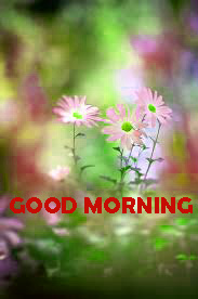 Good Morning Pictures Images Photo HD