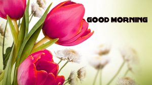 Good Morning Wishes Images Photo Pics With Flower