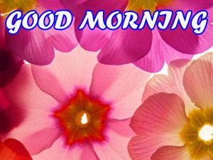 Good Morning All Pictures Images Wallpaper Free HD