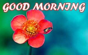 Good Morning All Photo Images Pictures Free HD