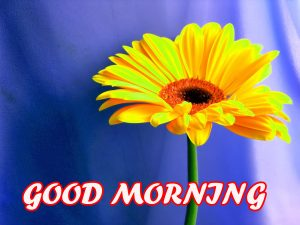 Good Morning All Pictures Images Photo Wallpaper HD Download