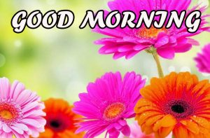Good Morning All Images Pictures Pics Free HD