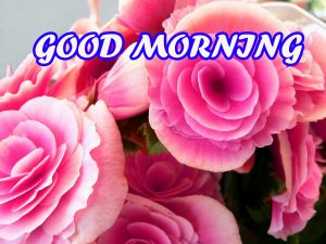 Good Morning All Photo Images Wallpaper Download