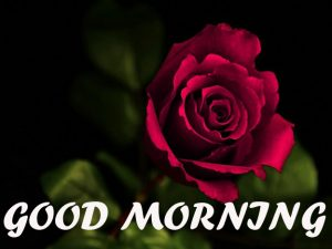 Good Morning All Images Photo Pictures HD Download