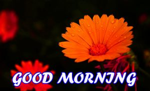 Good Morning All Photo Images Pictures Wallpaper Download