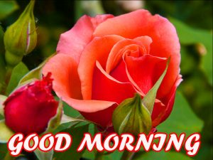 Good Morning All Pictures Images Photo Wallpaper Download