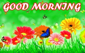 Good Morning All Photo Images Photo Wallpaper Download