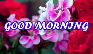 Good Morning All Photo Images Pictures Download