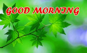 Good Morning All Photo Images Pictures HD