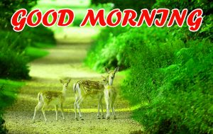 Good Morning All Images Photo Wallpaper HD Download