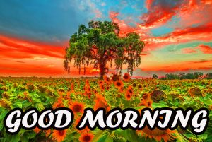 Good Morning All Wallpaper Photo Images Pictures Free HD
