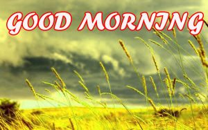 Gud Morning Photo Images Pictures Download HD