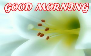 Gud Morning Pictures Images Photo Wallpaper HD Download For Facebook
