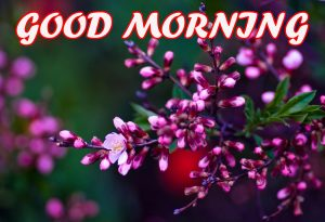 Gud Morning Photo Images Pictures Wallpaper HD Download