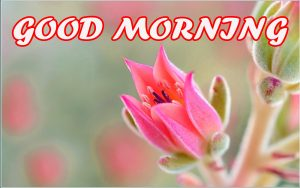 Gud Morning Wallpaper Photo Images Pictures HD Download For Facebook