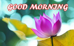 Gud Morning Wallpaper Images Pictures Photo Download For Whatsapp