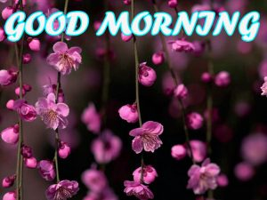 Gud Morning Photo Images Pictures Wallpaper HD Download For Facebook