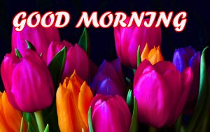 Gud Morning Photo Images Wallpaper Photo Images Pics HD Download
