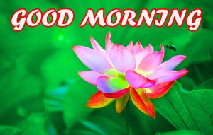 Gud Morning Photo Images Pictures Wallpaper HD