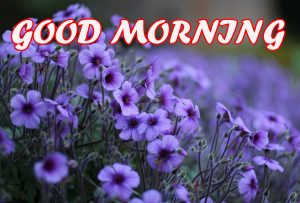 Gud Morning Photo Pictures Images Wallpaper Download