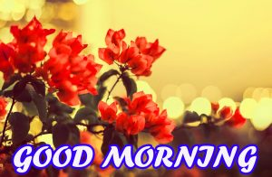 Gud Morning Images Photo Wallpaper Pictures HD Download