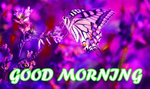Gud Morning Wallpaper Pictures Images Photo HD Download For Facebook