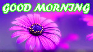 Gud Morning Pictures Images Photo Wallpaper Free Download