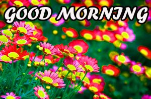 Gud Morning Wallpaper Photo Pictures Images HD