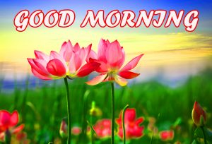 Gud Morning Wallpaper Images Photo Pictures Download