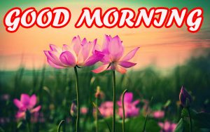 Gud Morning Pictures Images Photo Wallpaper Free HD