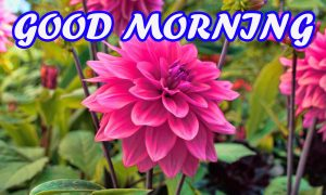Gud Morning Photo Images Pictures Wallpaper Free Download