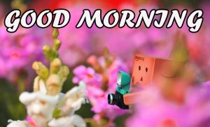 Gud Morning Wallpaper Photo Images Pictures HD