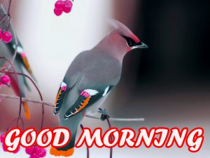 Gud Morning Wallpaper Pictures Photo Images Free HD