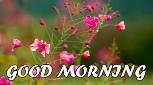 Gud Morning Photo Wallpaper Pictures Images HD Download For Facebook