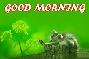 Gud Morning Images Photo Wallpaper Pictures Free Download
