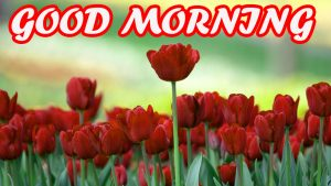 Gud Morning Photo Images Pictures Wallpaper Free HD