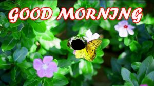 Gud Morning Wallpaper Images Pictures Photo Download