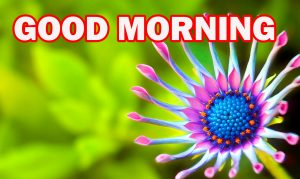 Gud Morning Pictures Images Photo Free HD