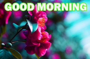Gud Morning Pictures Photo Images Wallpaper Download