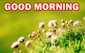 Gud Morning Wallpaper Photo Images Pictures Download For Facebook
