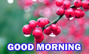 Gud Morning Wallpaper Pictures Images Photo Download