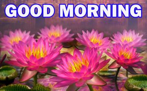 Gud Morning Pictures Images Wallpaper Photo Download For Whatsapp