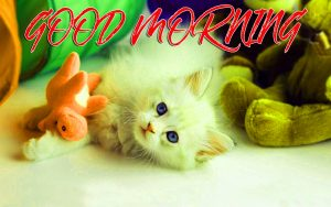 Gud Mrng Pictures Images Photo Wallpaper Free HD