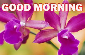 Gud Morning Photo Wallpaper Pictures Images HD