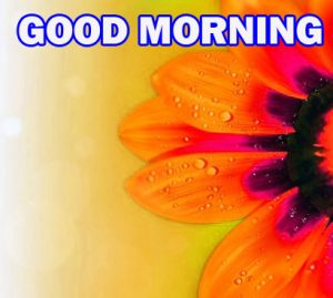 Gud Morning Wallpaper Pictures Photo Images Download For Facebook