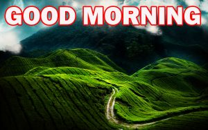 Gud Morning Images Photo Images Wallpaper HD Download
