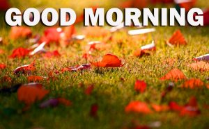 Gud Morning Wallpaper Photo Images HD