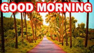 Gud Morning Wallpaper Photo Images Pictures Free HD