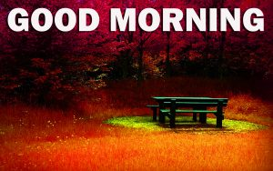 Gud Morning Pictures Images Wallpaper Photo Free HD